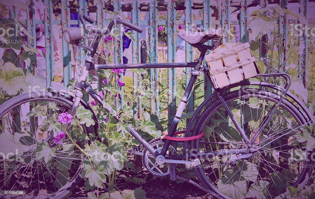 Old bike at flower garden stock photo