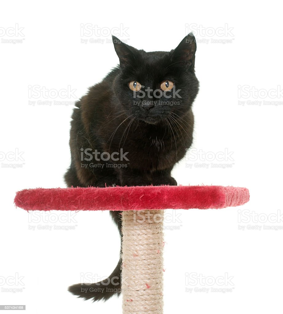 old black cat on scratching post stock photo