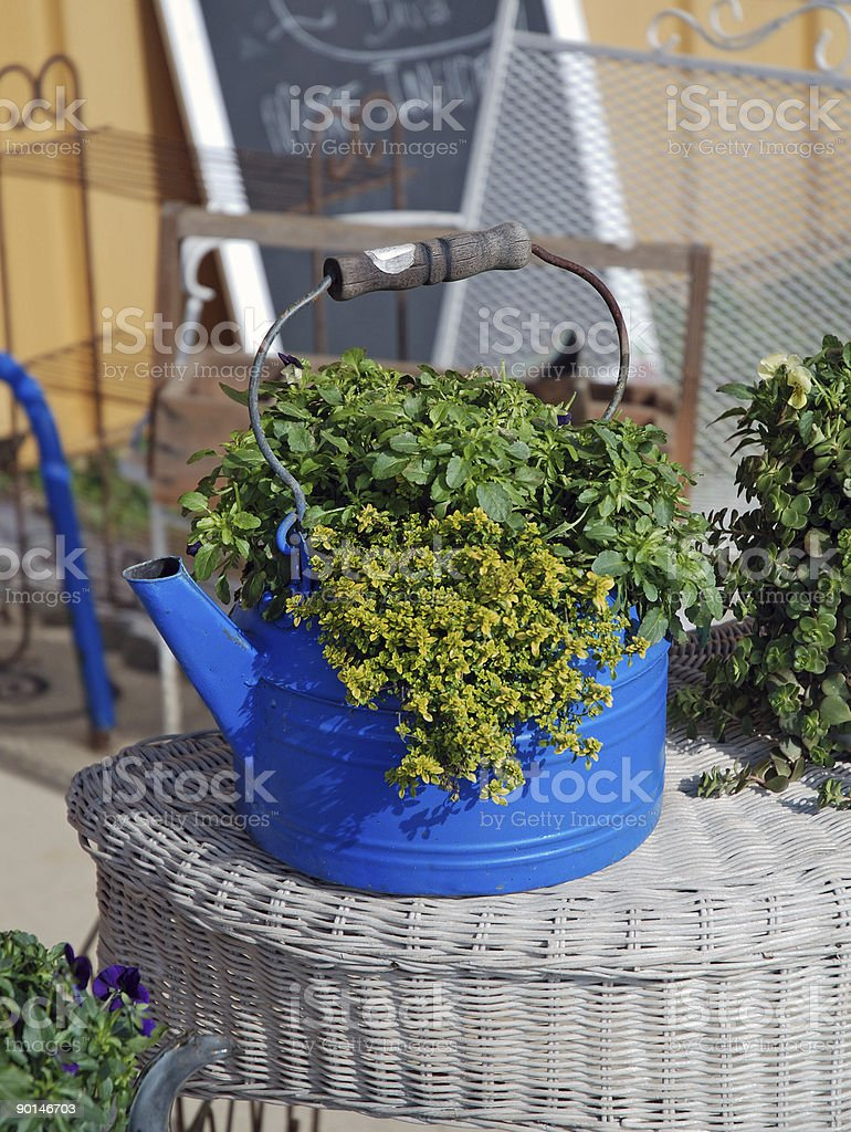 old blue kettle with green plants royalty-free stock photo