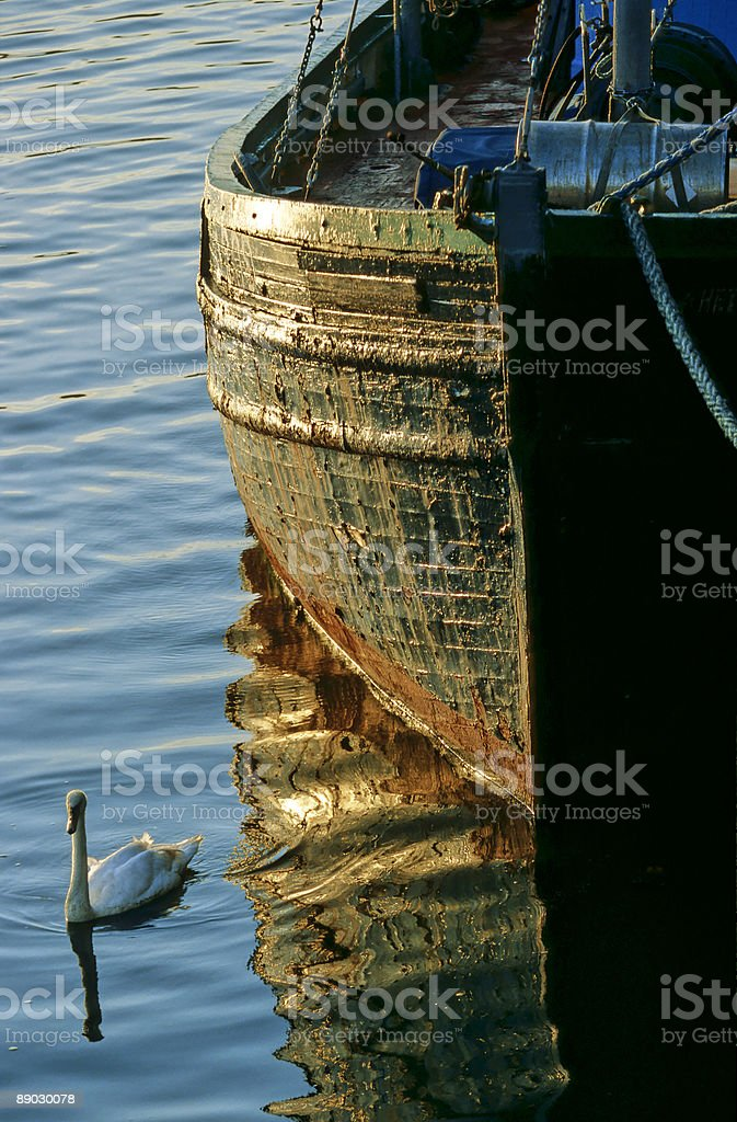 Old Boat and Swan royalty-free stock photo