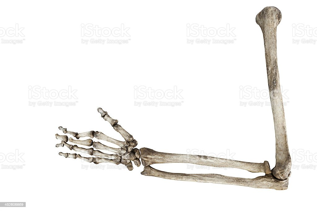 old bones of the human hand isolated on white background stock photo