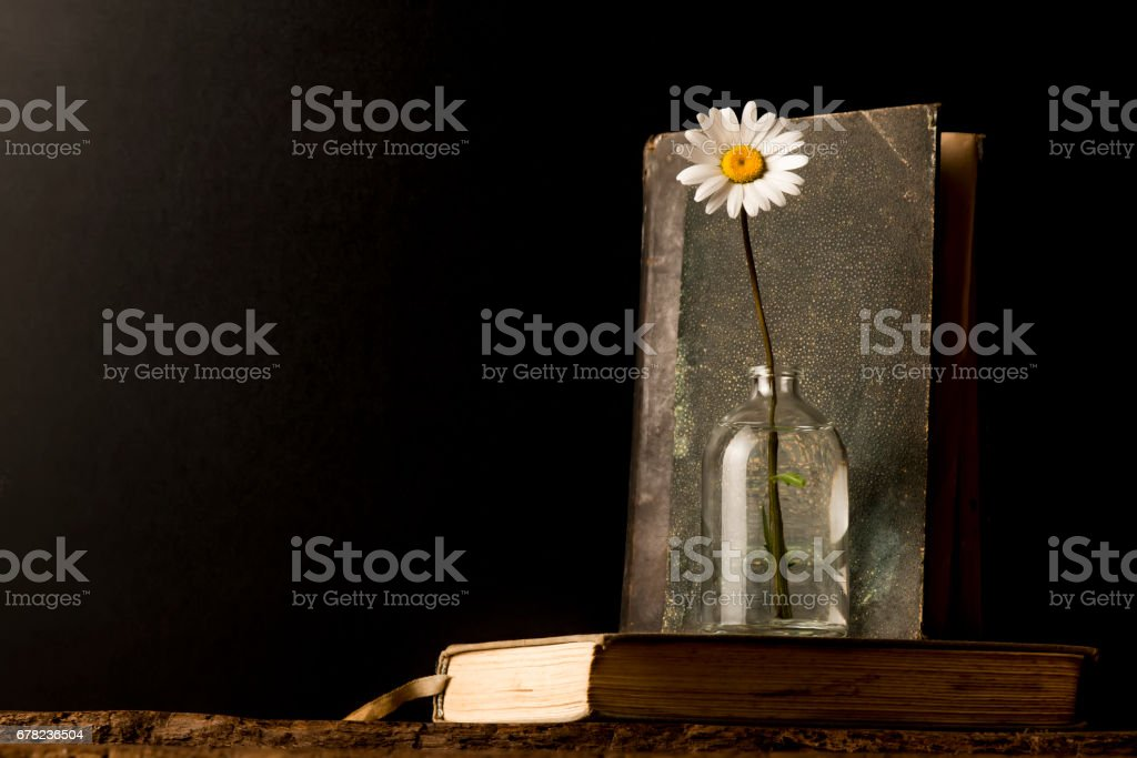 Old books and daisy stock photo