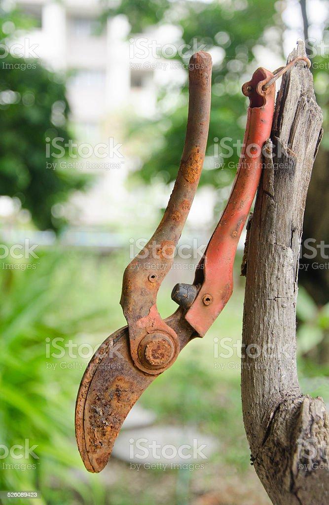 Old Branch scissors stock photo