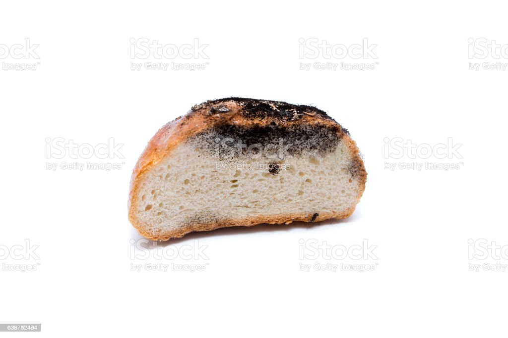 old bread and mold stock photo
