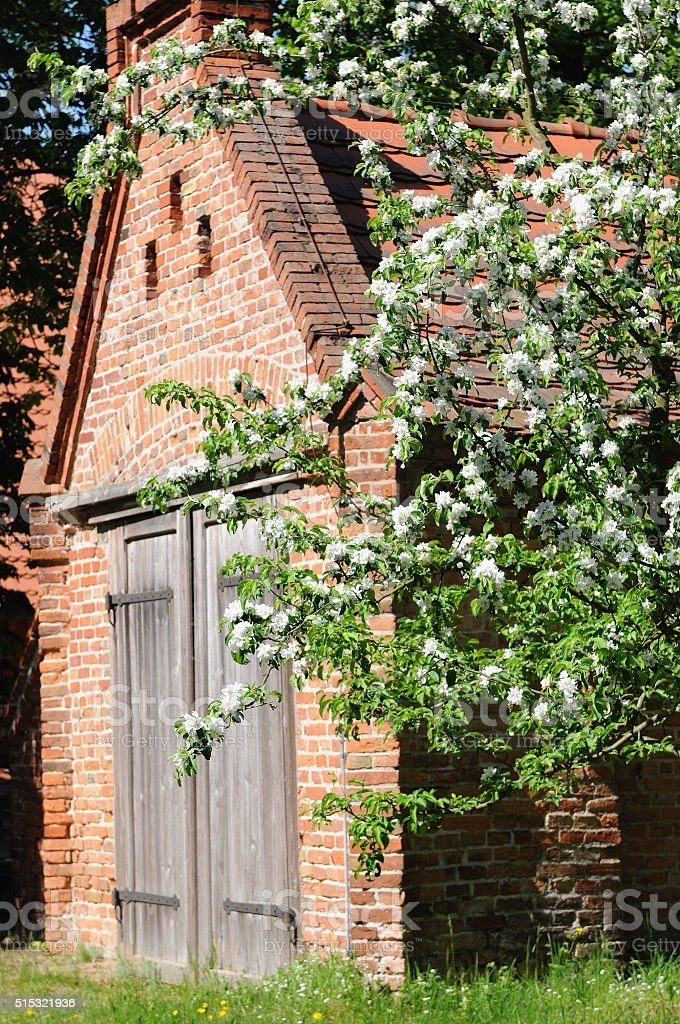 old brick barn with pear tree in blossom stock photo