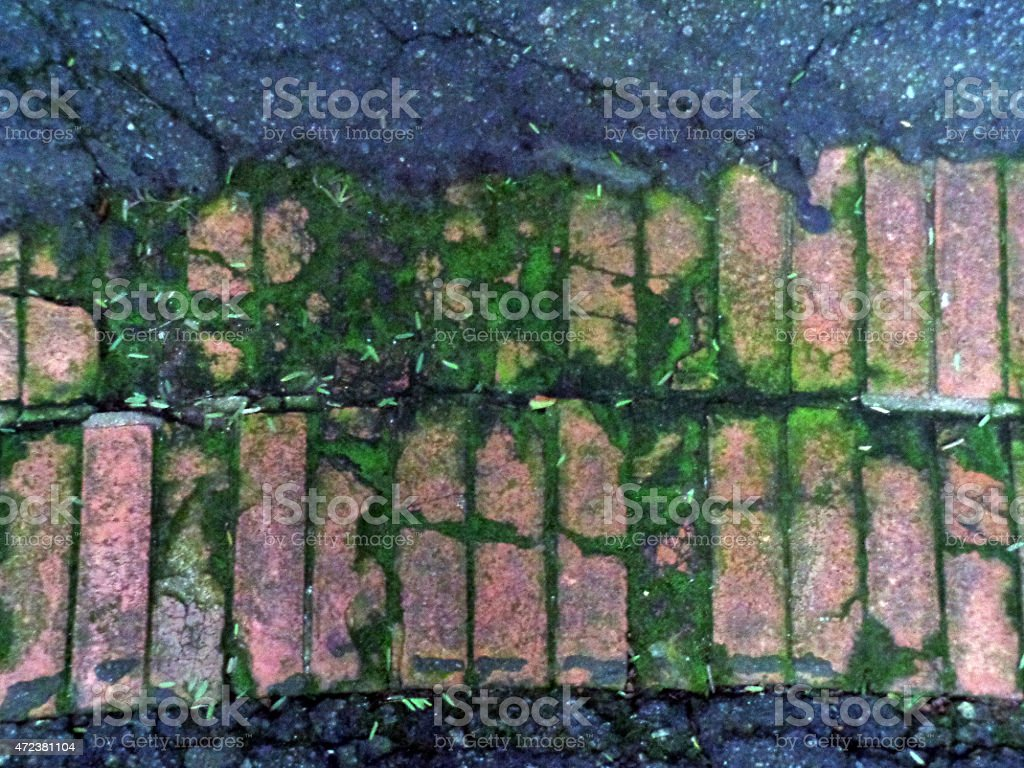 old brick pavement with moss stock photo
