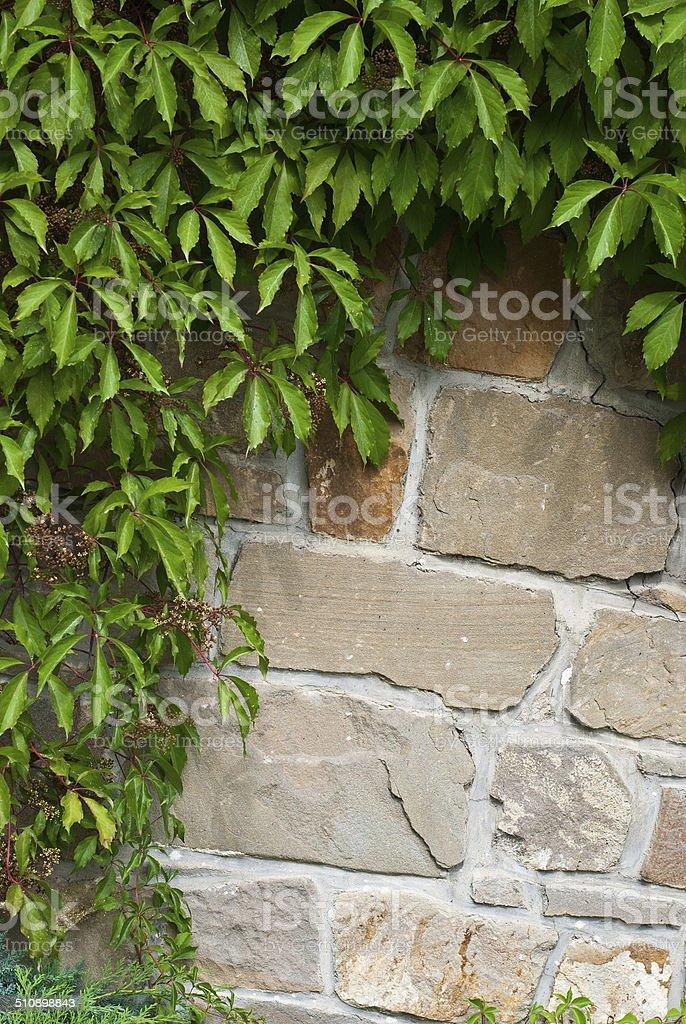 Vieja pared de ladrillos foto de stock libre de derechos