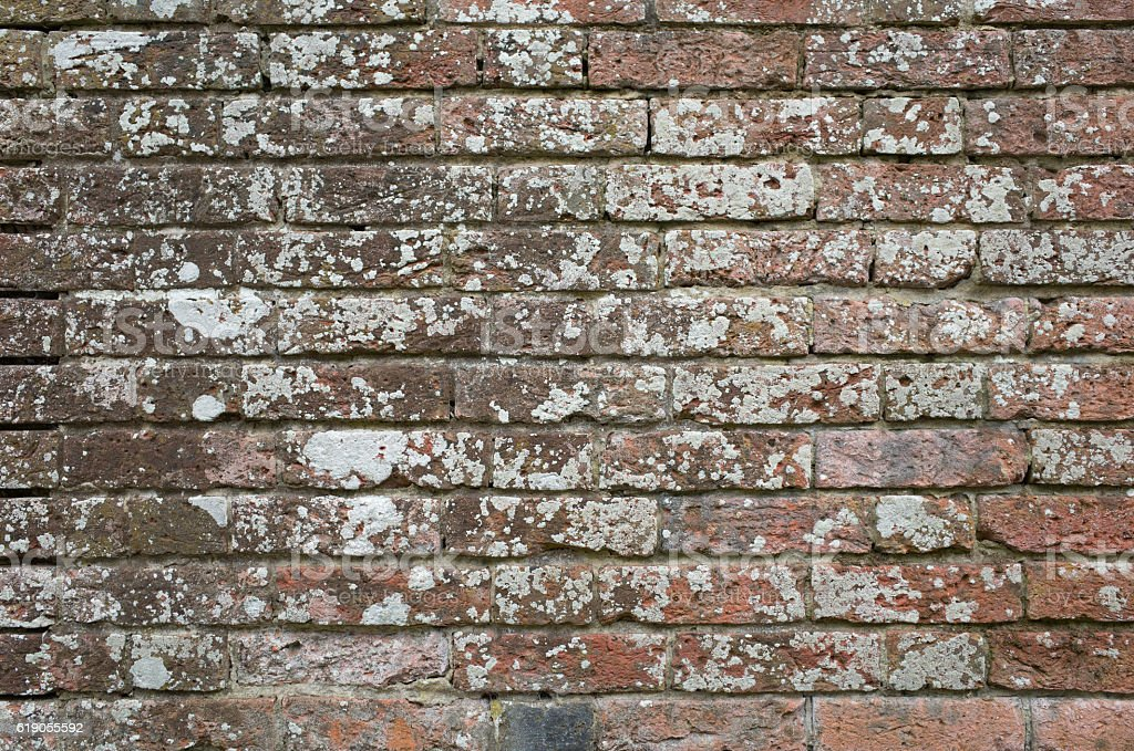 Old Brick Wall with Lichen Background Texture stock photo