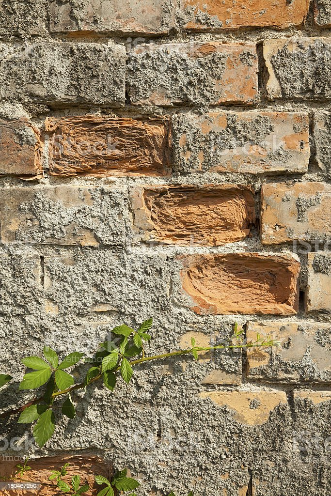 Old brick wall with moss growing royalty-free stock photo