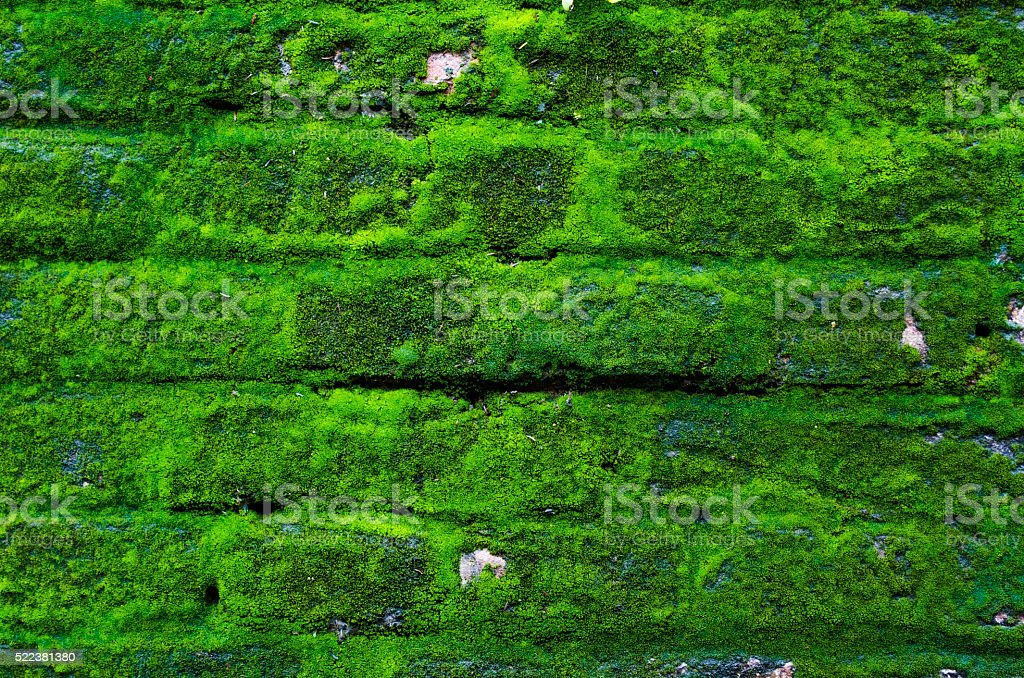Old brick wall with moss stock photo