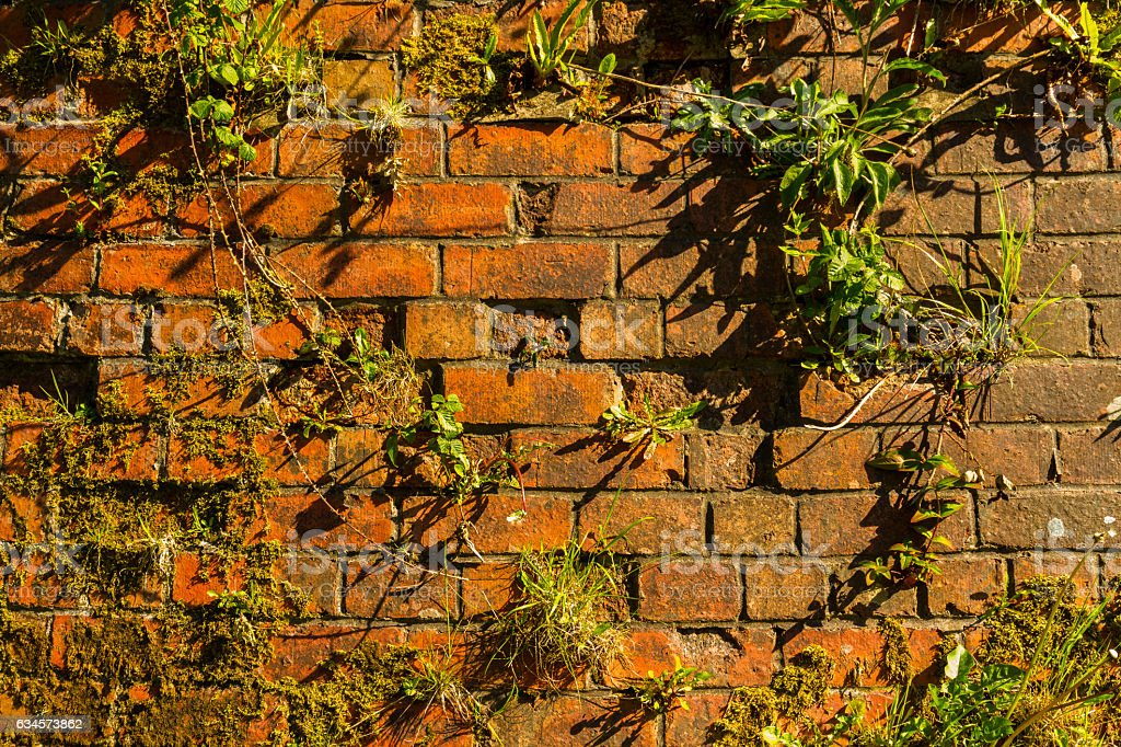 Old brick wall with plants in evening light stock photo