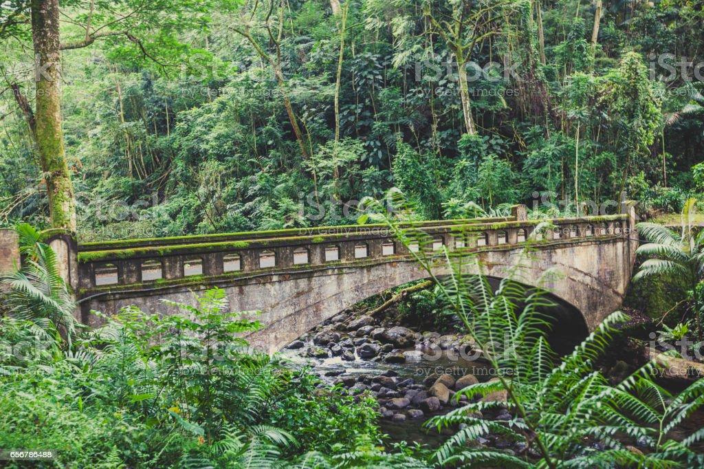 old bridge in the jungle of hawaii stock photo