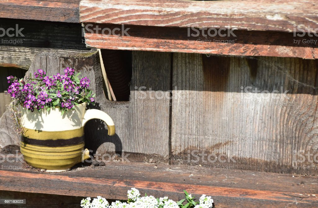 Old broken ceramic mug with lilacbush (Aubrieta deltoidea) as a garden decoration stock photo