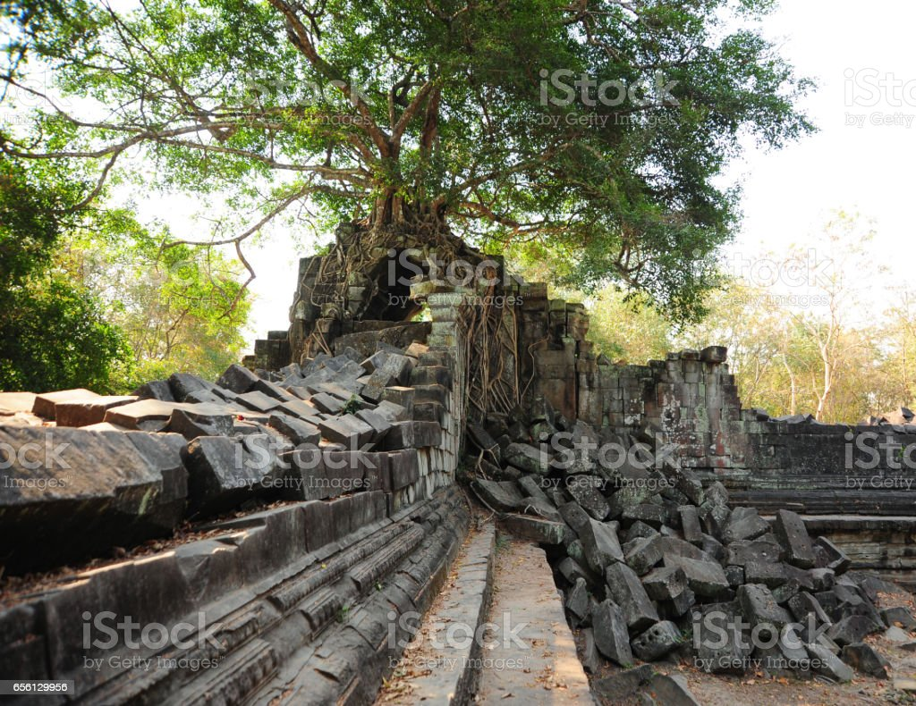 Old Buddhist monastery with large tree roots growing on roof,Cambodia. stock photo