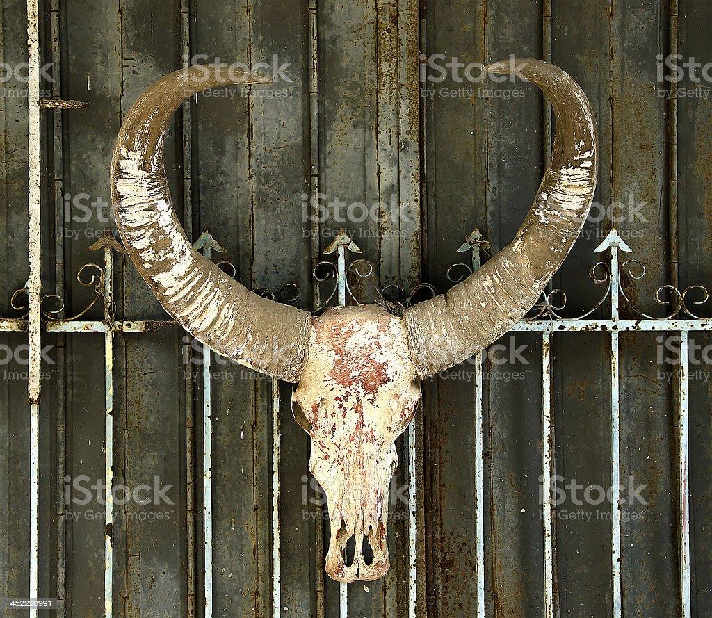 Old buffalo skull royalty-free stock photo