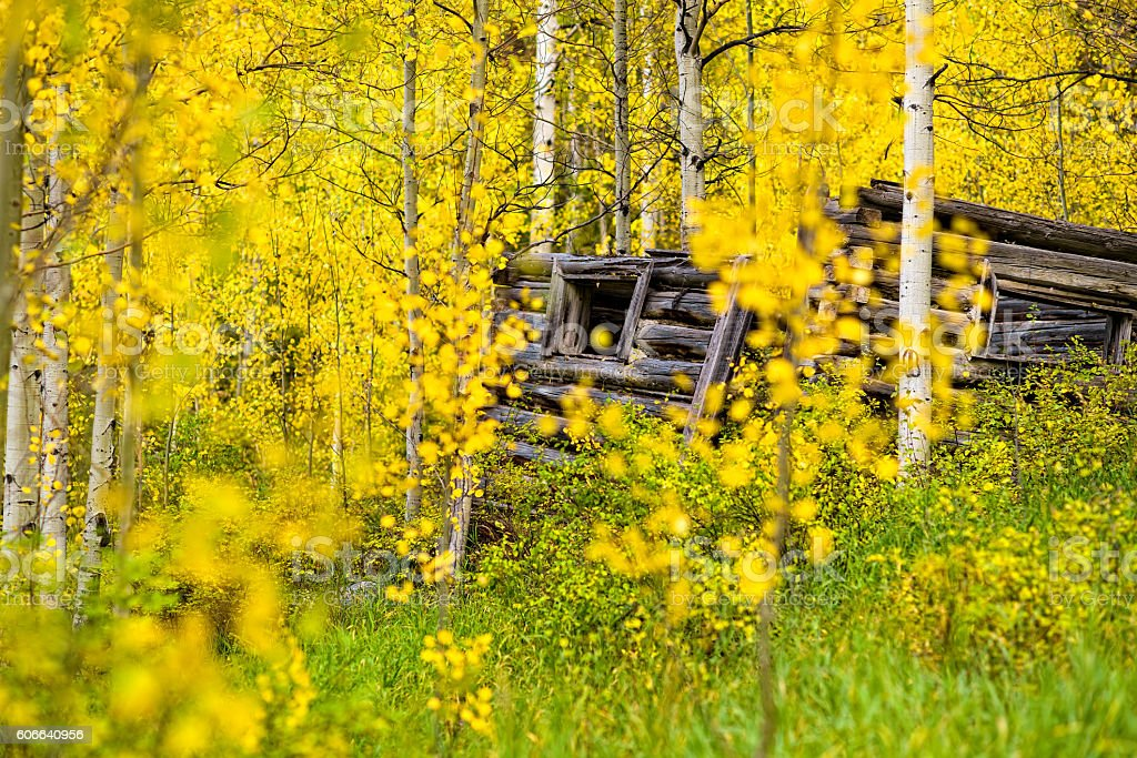 Old Cabin and Fall Aspens in Autumn stock photo