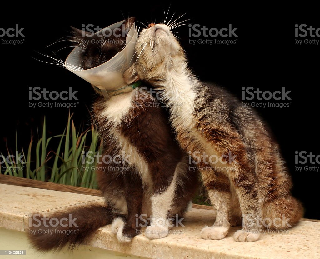 old cats royalty-free stock photo