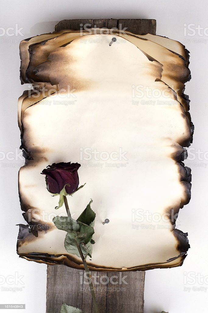 Old charred note and rose royalty-free stock photo