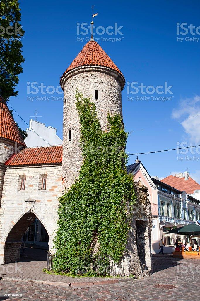 Old City. Tallinn, Estonia the entrance from  Viru Gate. stock photo