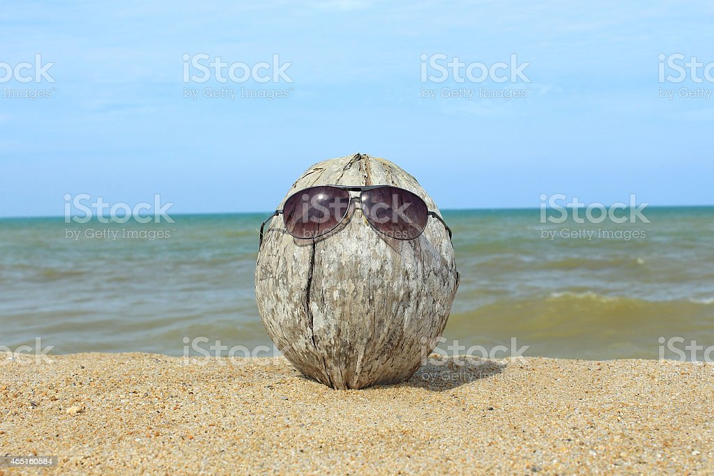 Old coconut lounging on the beach stock photo