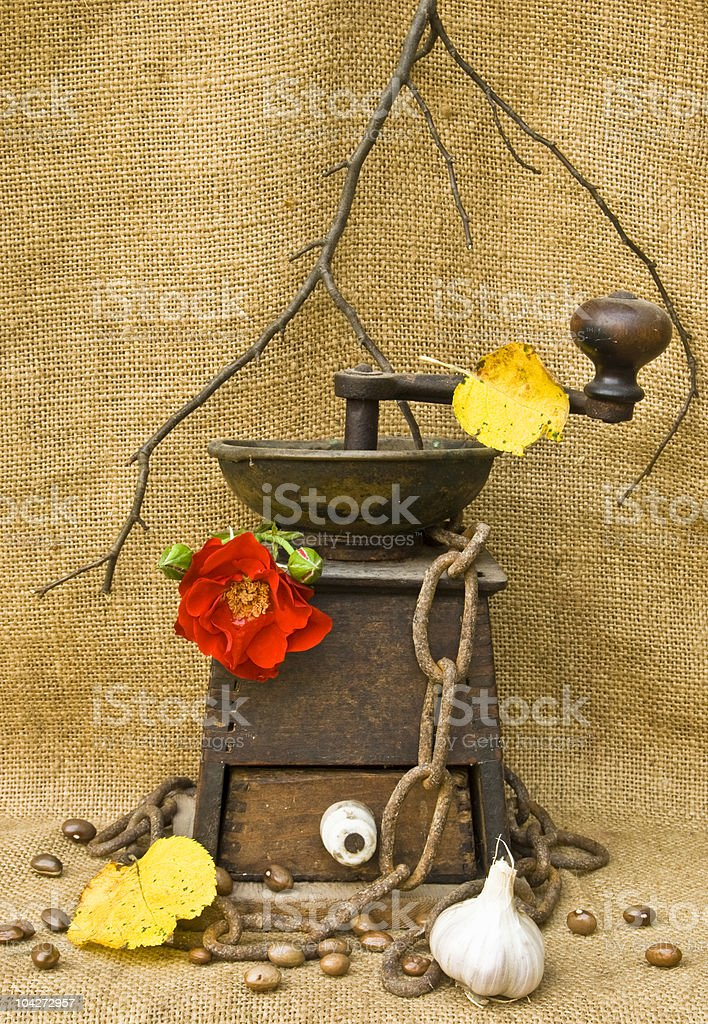 Old coffee mill with chain rose and garlic royalty-free stock photo