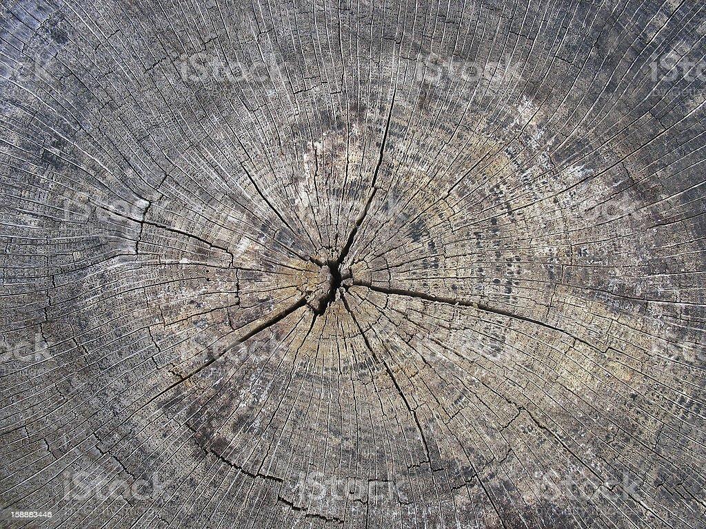 Old cracked tree stump wood texture royalty-free stock photo
