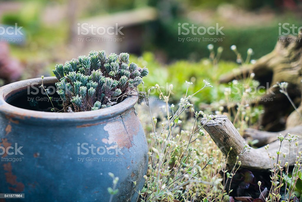 old cup vase in garden stock photo