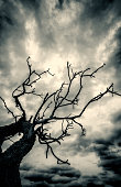 Old Dead Tree and Stormy Sky