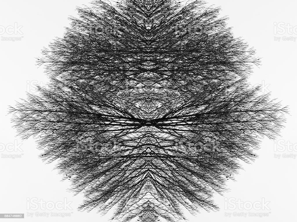Old Dead Tree Art Concept stock photo