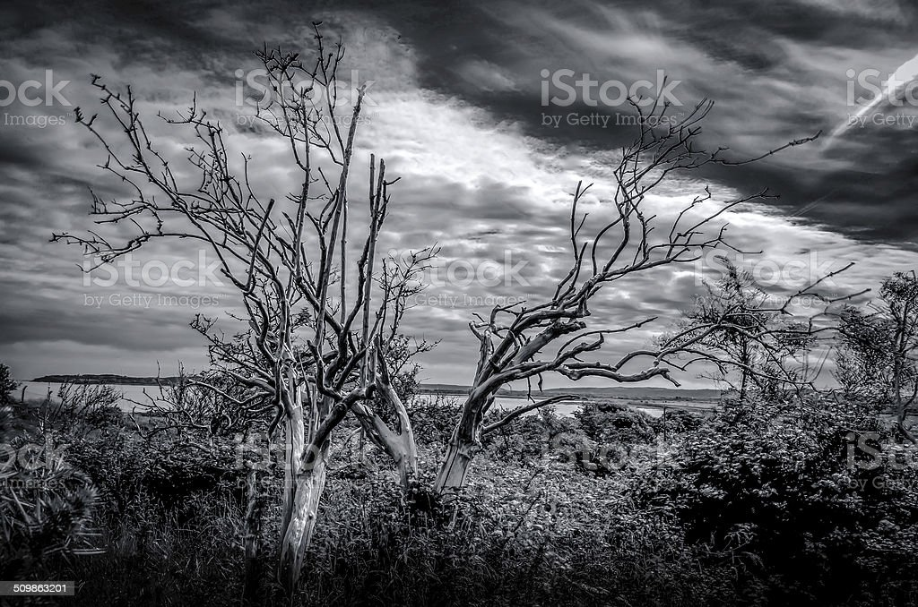 old dead tree, black and white landscape stock photo