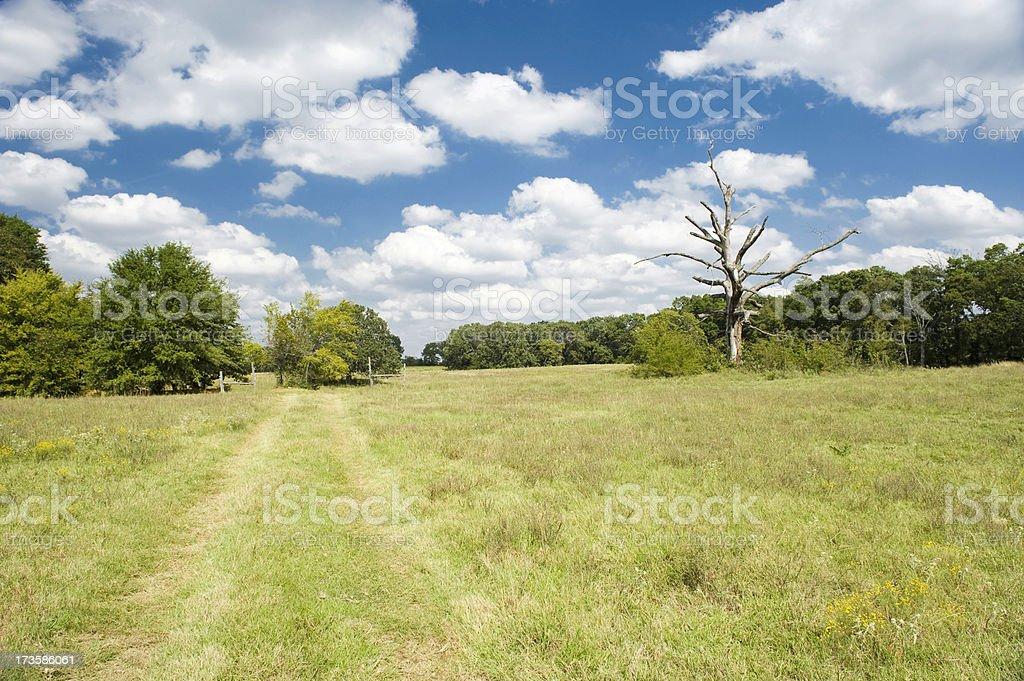 Old dead tree on grassy farm road, Oklahoma royalty-free stock photo