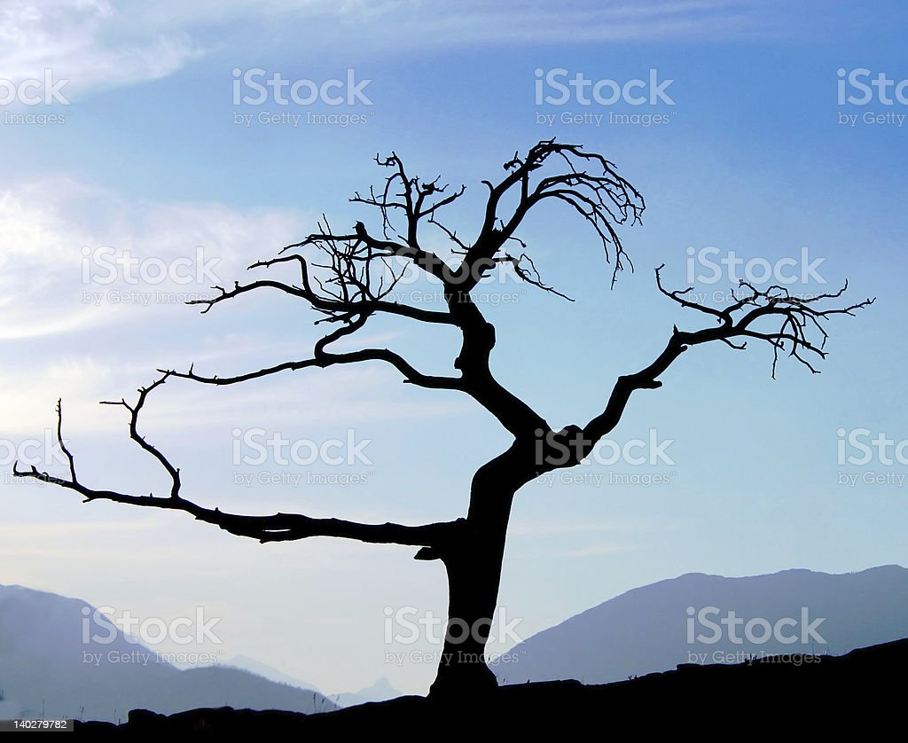 Old dead tree silhoutte stock photo