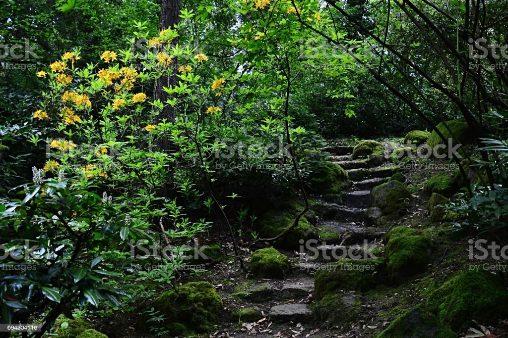 Old decorative stone stairs with yellow flowers of Barberry Berberis Sieboldii on right side, shot in shadowy part of arboretum stock photo