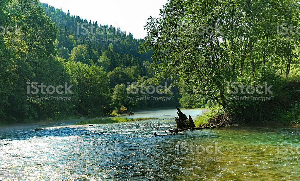 Old dilapidated dam in river, which flows along the woodland stock photo