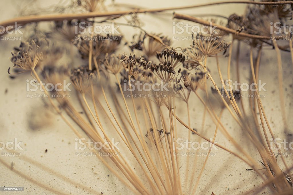 Old, dilapidated, dry, vintage grass. stock photo