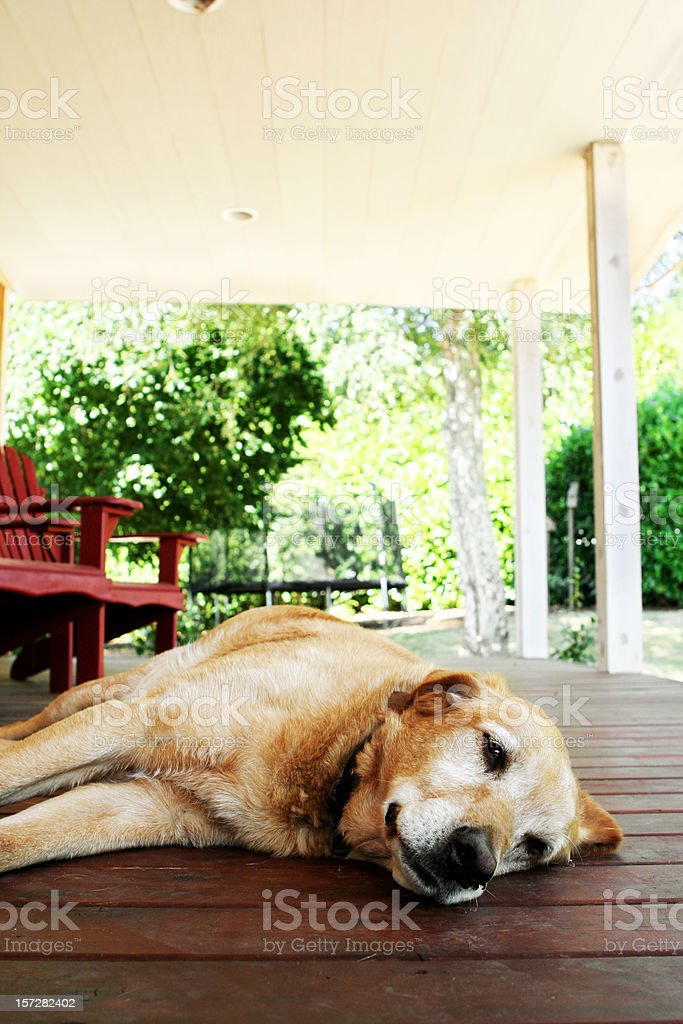 Old Dog Being Lazy on the Porch royalty-free stock photo