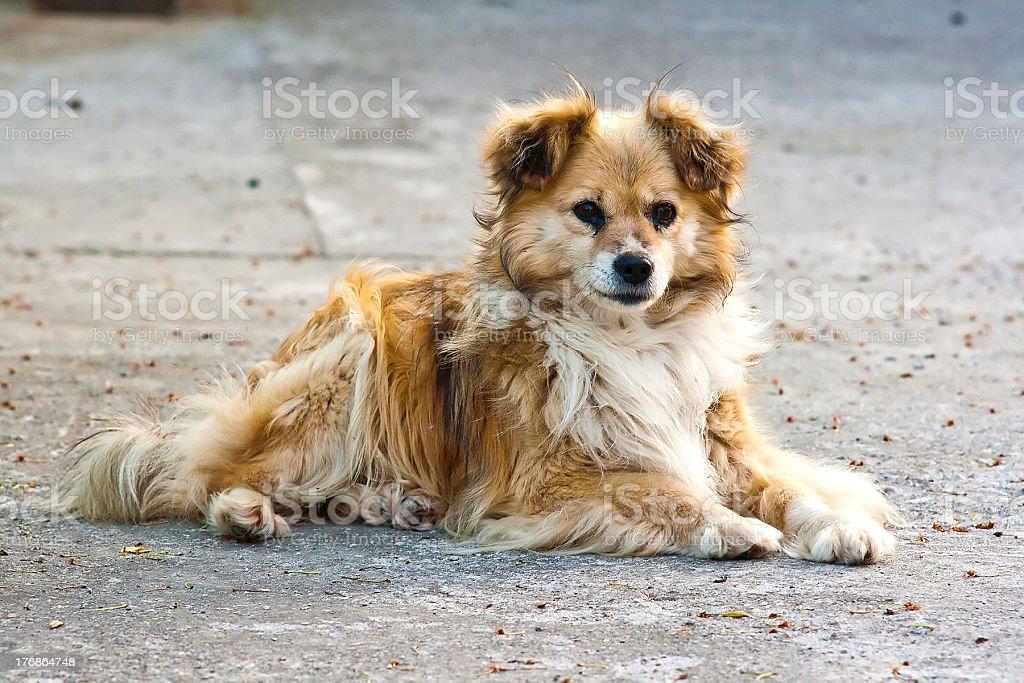 Velho cachorro foto royalty-free