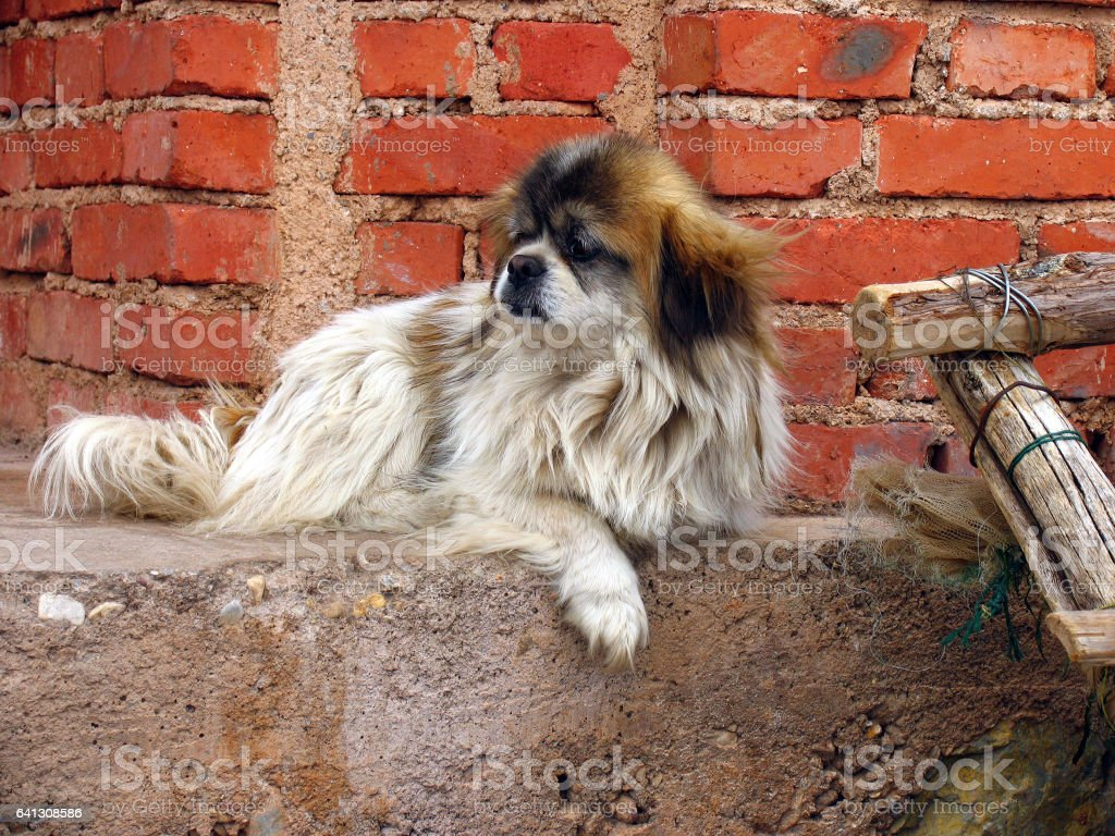 old dog waiting for his owner in the street stock photo