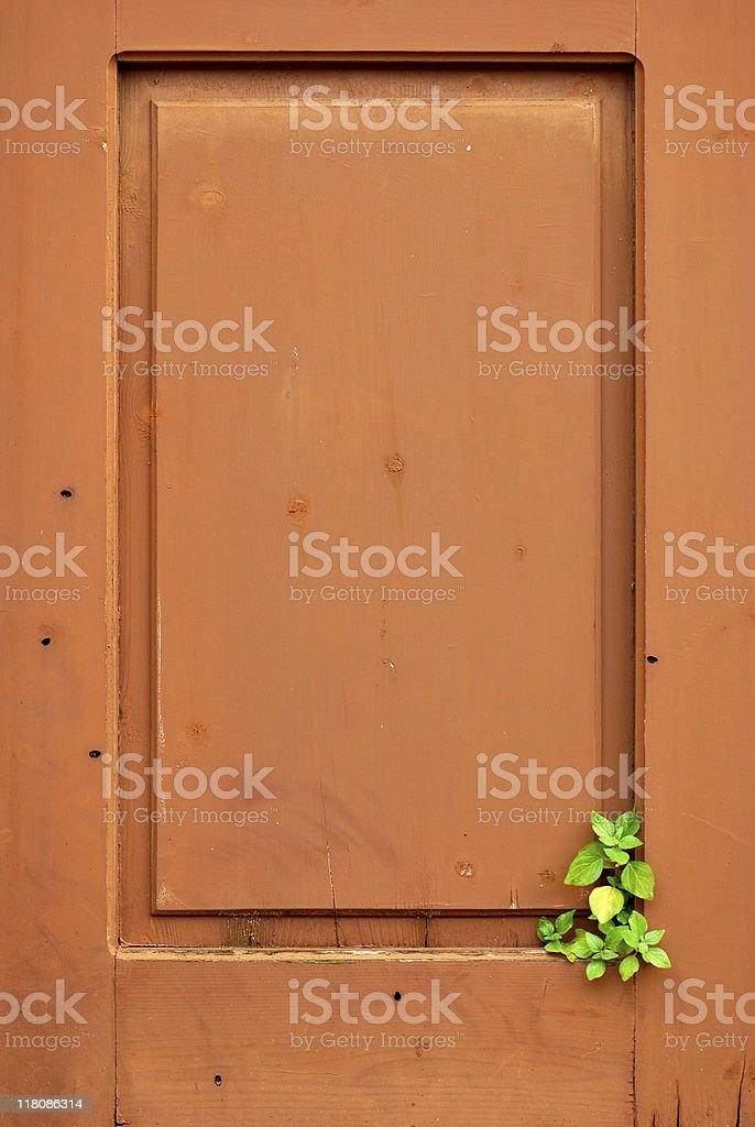 Old door – fresh plant royalty-free stock photo