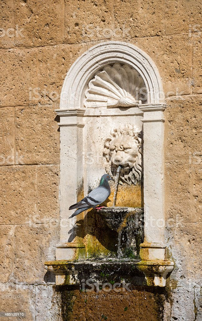 Old drinking fountain and pigeon, Lazio Italy stock photo