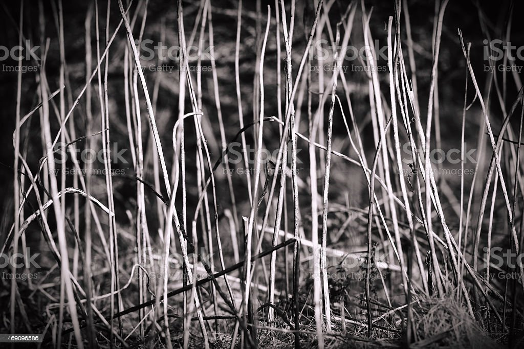 Old dry grass plants texture background. Retro Vintage colour filters stock photo
