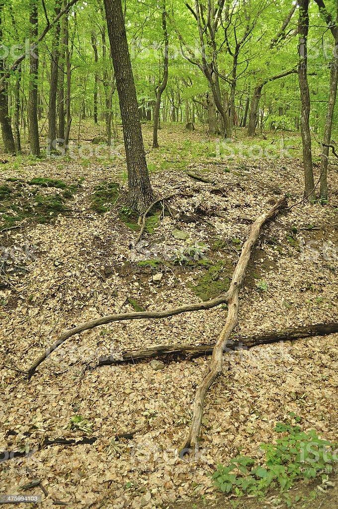 Stary suchy Pień drzewa leżeć w zielony Las zbiór zdjęć royalty-free