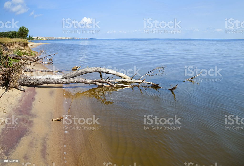 Old dryed out trees on the beach. royalty-free stock photo