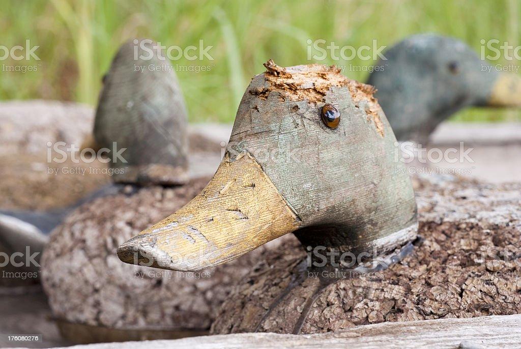 Old Duck Decoy Head stock photo
