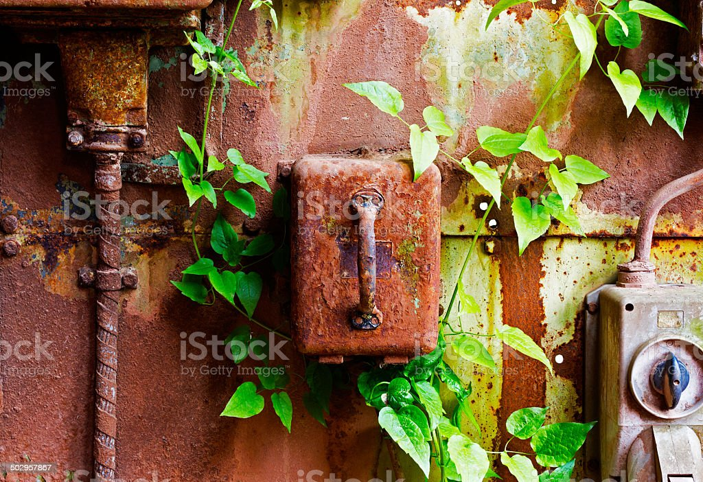 Old electrical panel on iron wall and leaves of ivy stock photo
