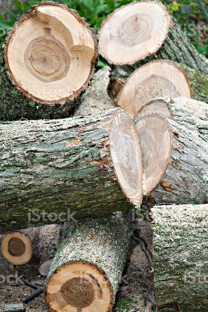 Old Elm royalty-free stock photo