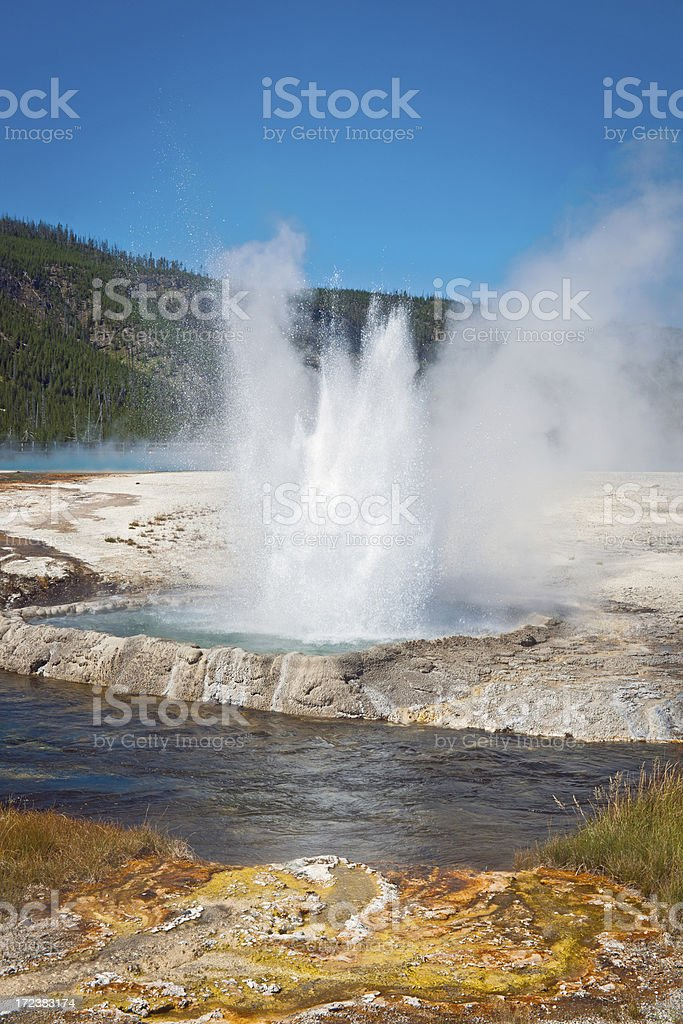 Old Faithful in Yellowstone National Park Wyoming USA royalty-free stock photo