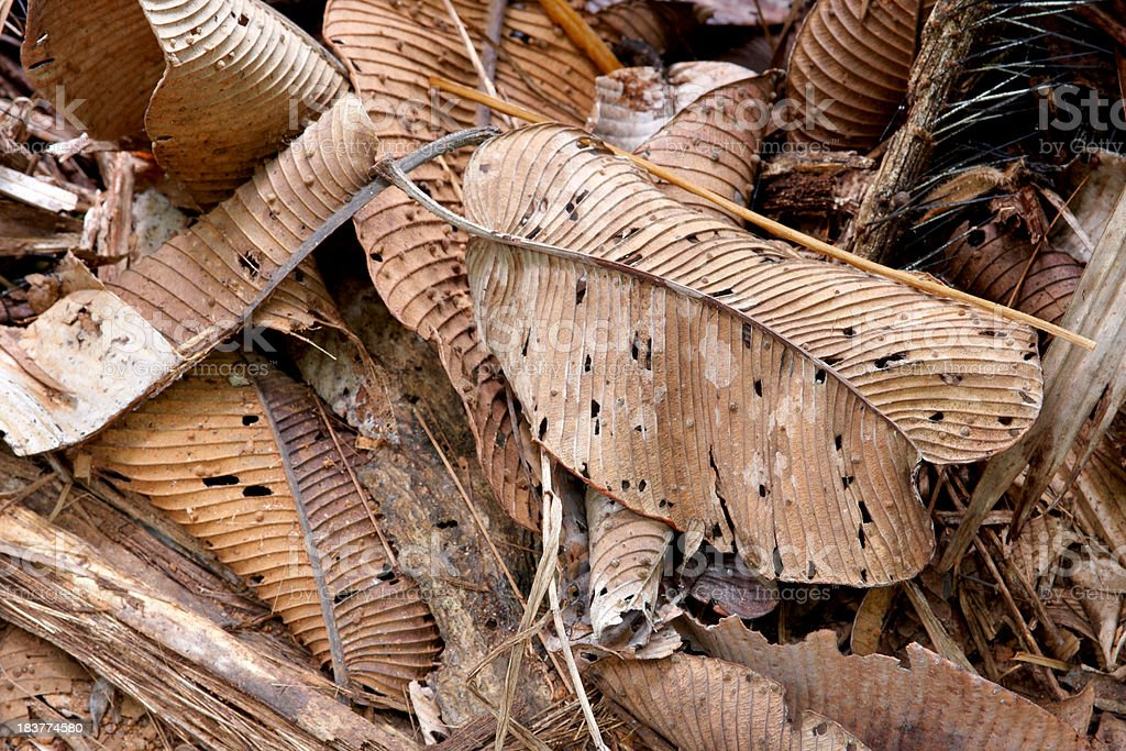 old, fallen palm leaf royalty-free stock photo