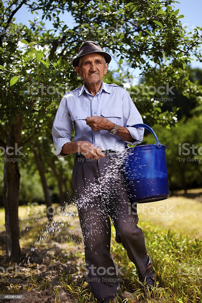 Old farmer fertilizing in an orchard royalty-free stock photo