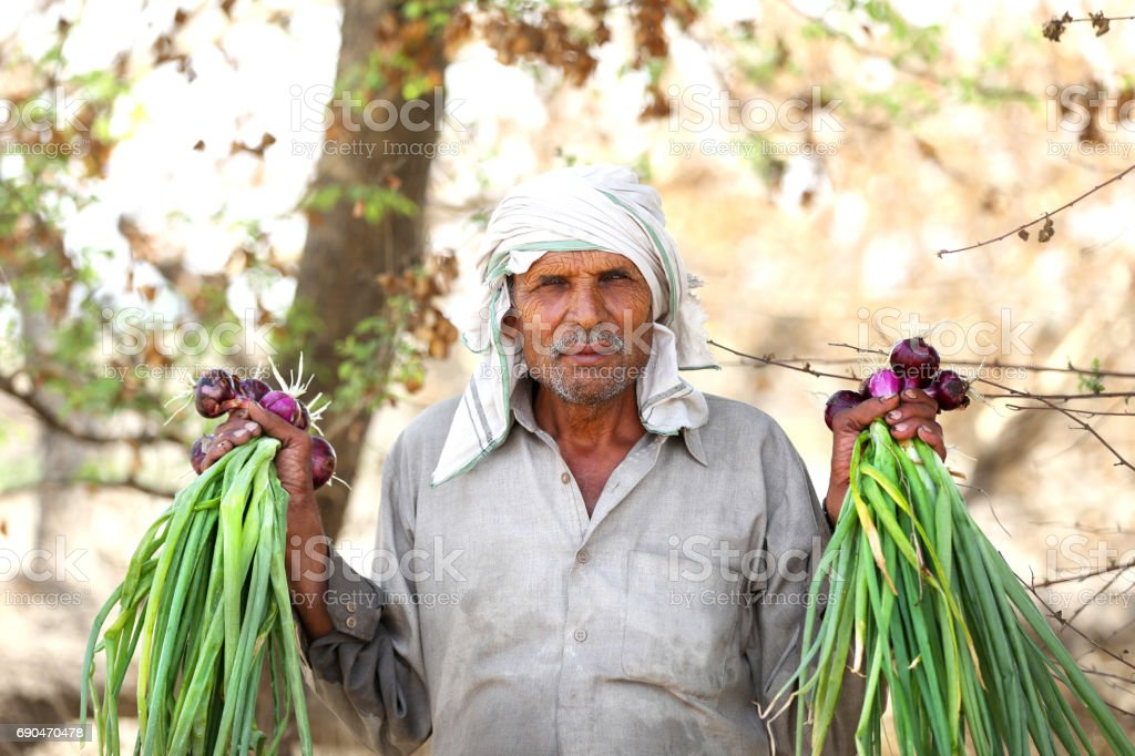 Old farmer holding onion bunch stock photo